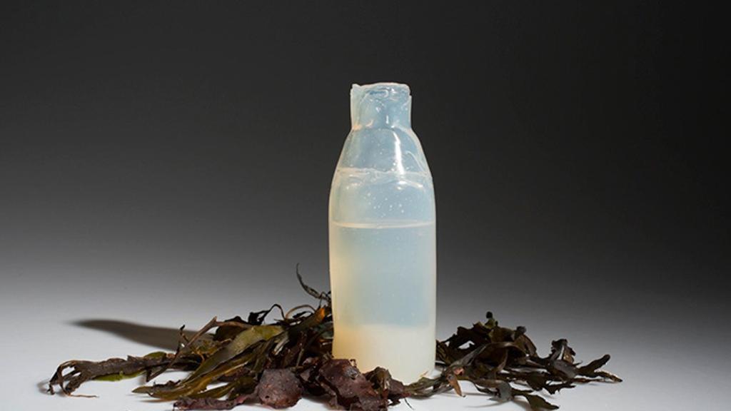 La bouteille écologique des fonds marins