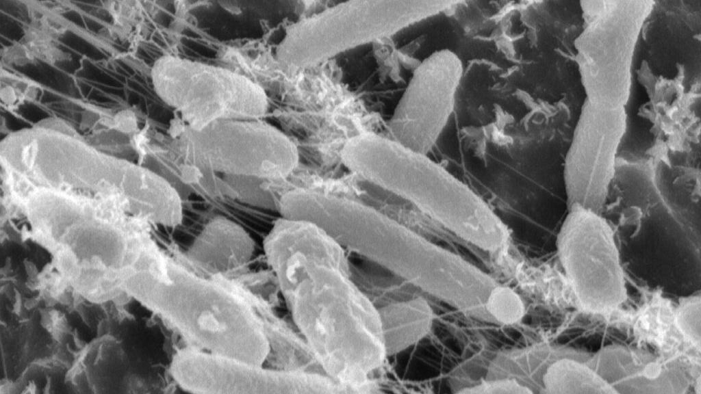 La bactérie dévoreuse de plastique