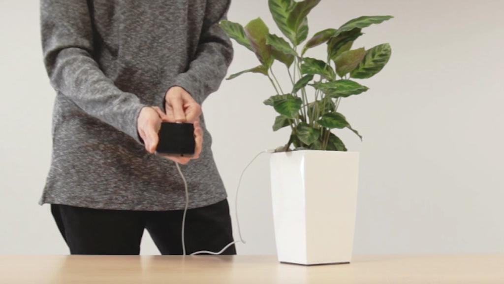 Bioo Lite, la plante chargeuse de téléphone