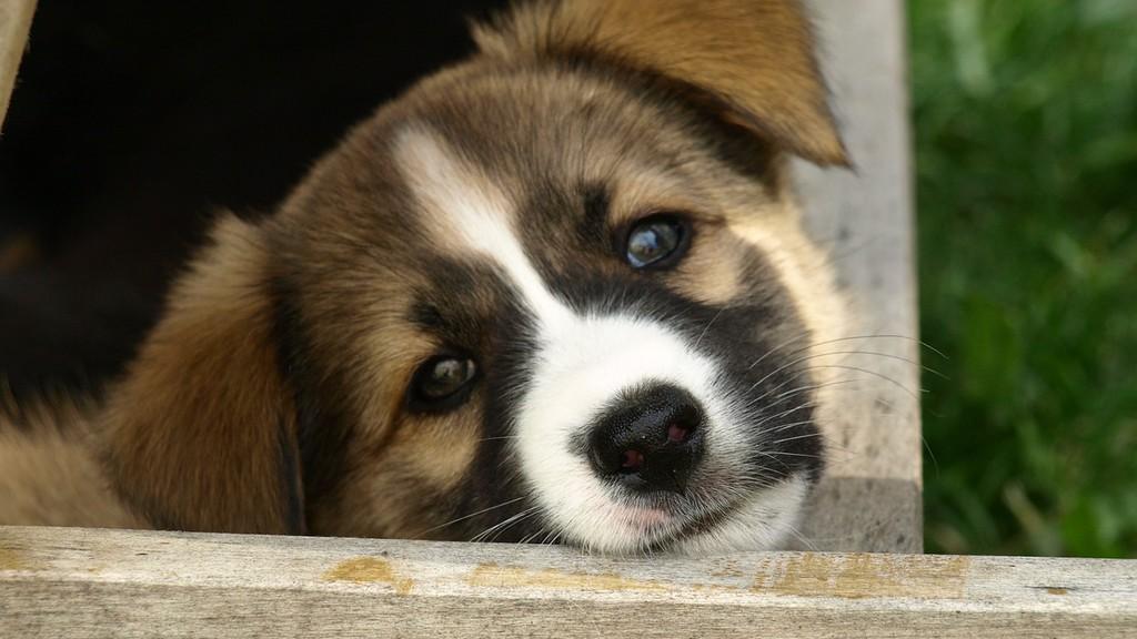 On pourra bientôt être diplomé en droit animal en France