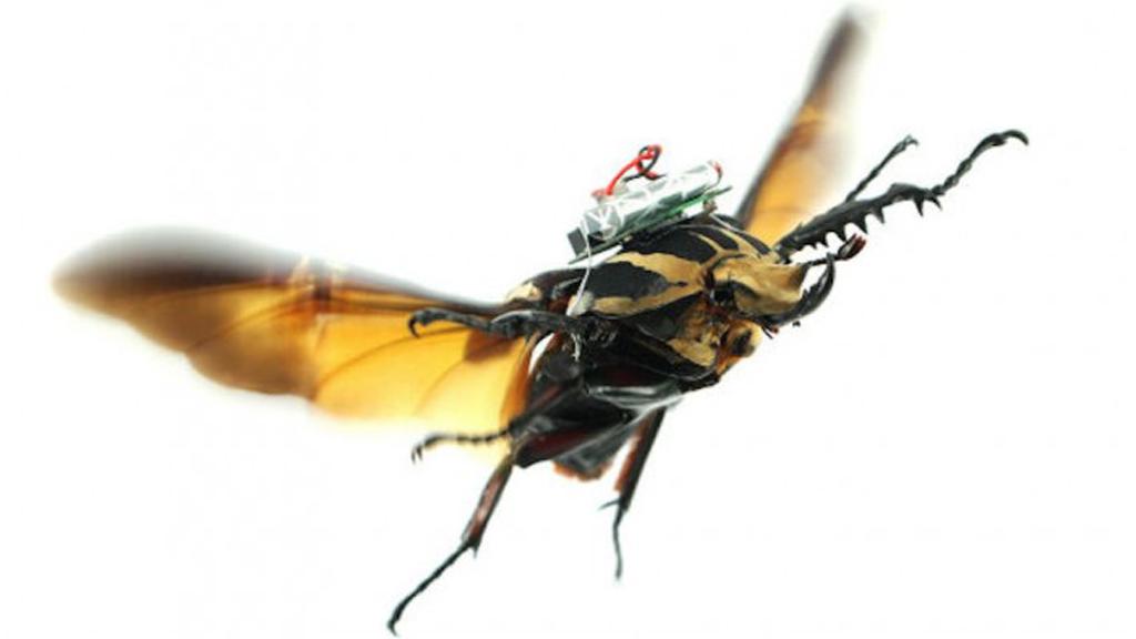Pilotez des scarabées volants !
