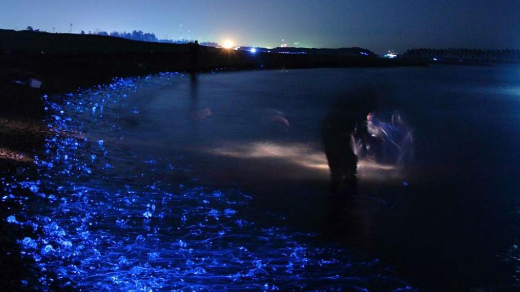 Toyama, le bord de mer lumineux du Japon