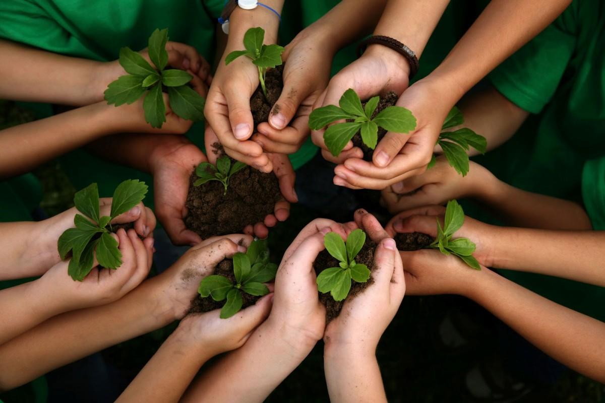 Payer ses frais de scolarité en Inde avec... un arbre
