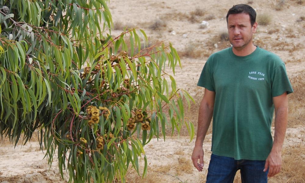 Aviv Eizenband : l'homme qui sauve les abeilles en plantant des arbres