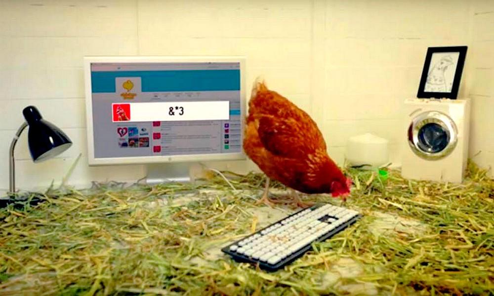 Adopte une poule... en ville !