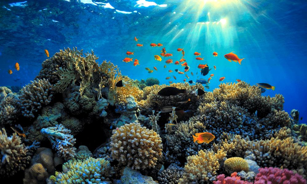 L'Australie répare sa barrière de corail grâce à une imprimante 3D