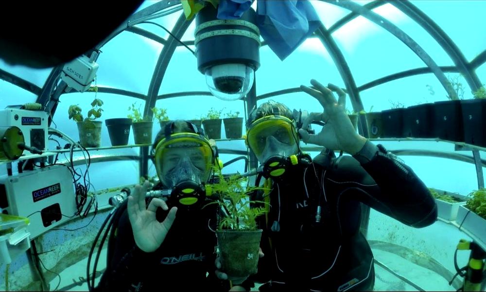Des serres sous-marines pour respecter l'environnement