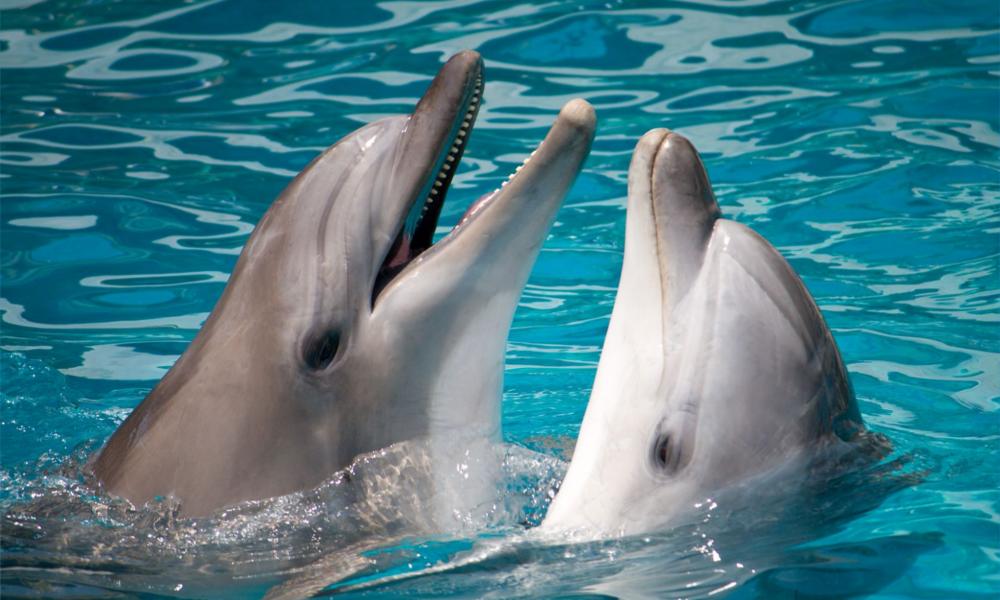 Un algorithme pour comprendre les dauphins
