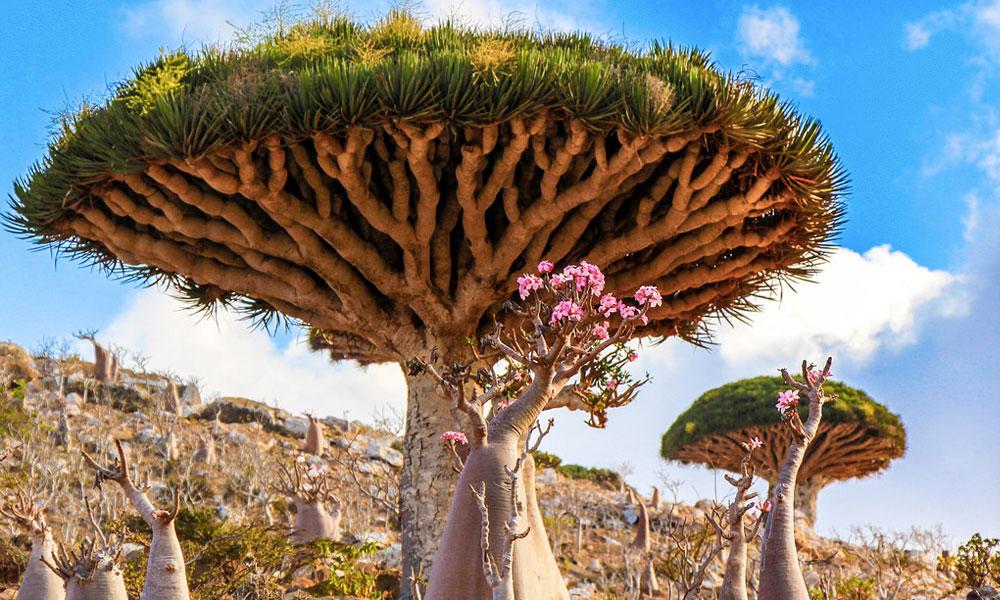 Socotra, une île extraterrestre à visiter… sur Terre !