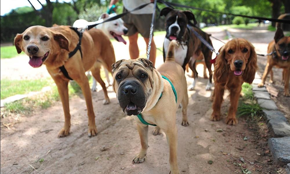 Garder des chiens pour voyager gratuitement