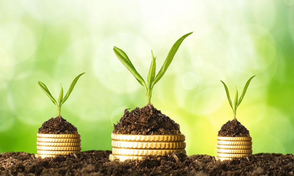 5 solutions pour devenir millionnaire avec des idées vertes