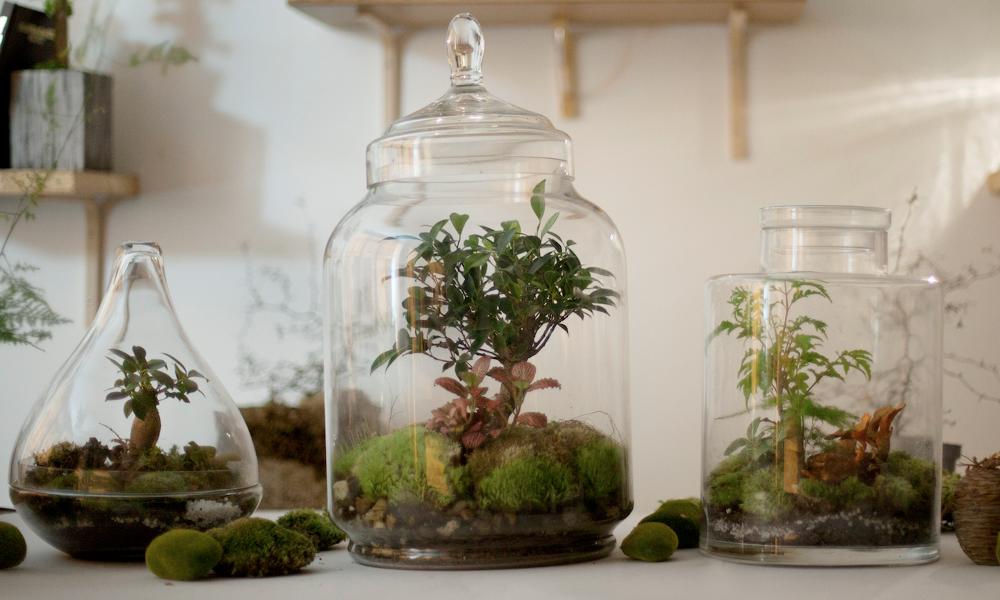 Avec Green Factory, maintenant vos plantes s'arrosent toutes seules