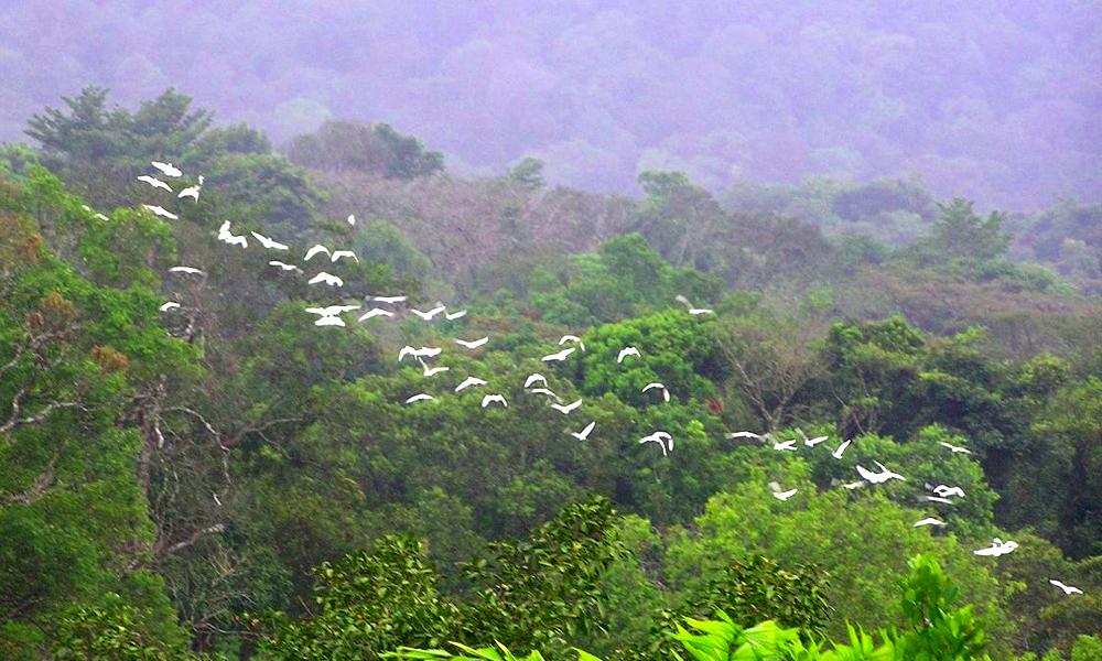 SAI envolée oiseaux