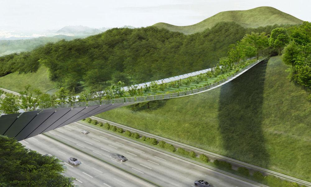 Ce pont végétal va sauver la vie de nombreux animaux