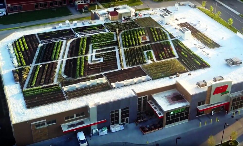 Ce supermarché cultive ses légumes sur son toit