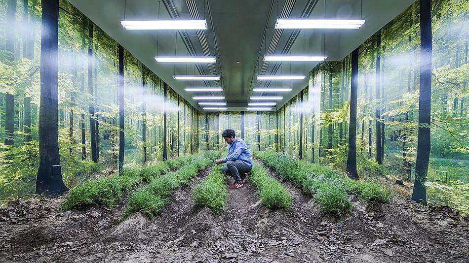 Il crée un jardin éphémère alimenté par les tweets de Donald Trump
