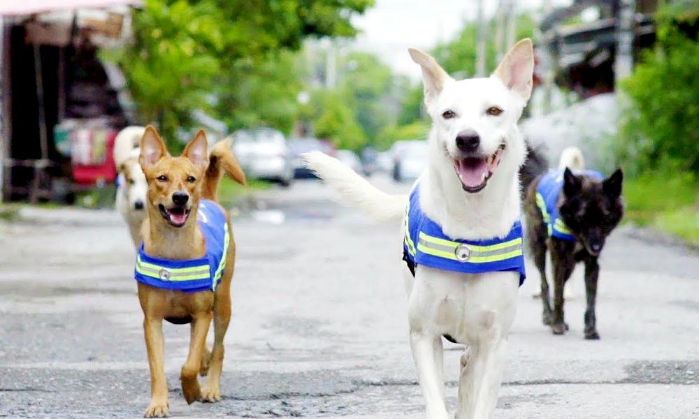 Demain, les chiens errants connectés remplaceront les caméras de surveillance