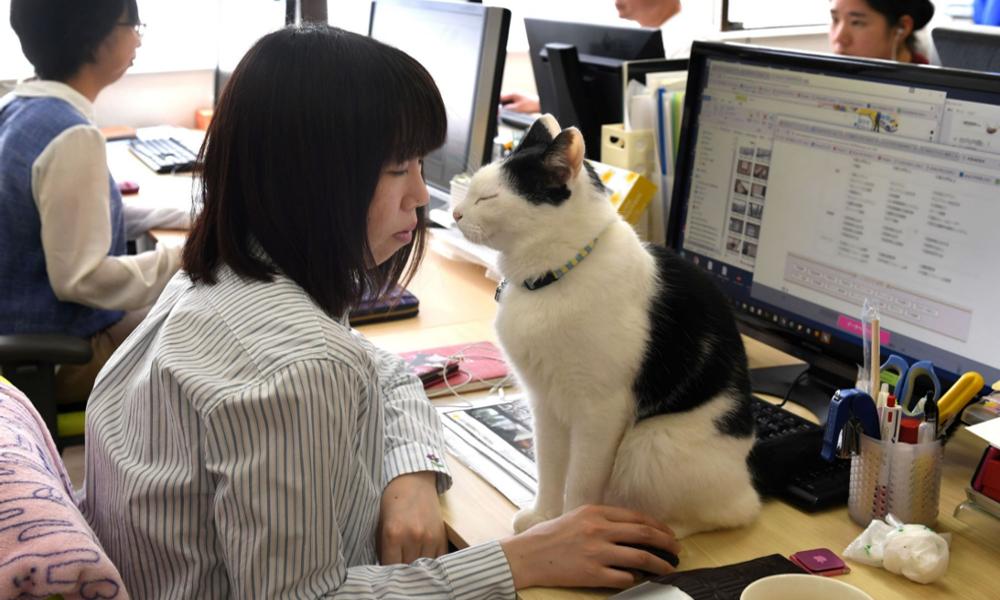 Au Japon, des chats sauvent les employés du burn-out