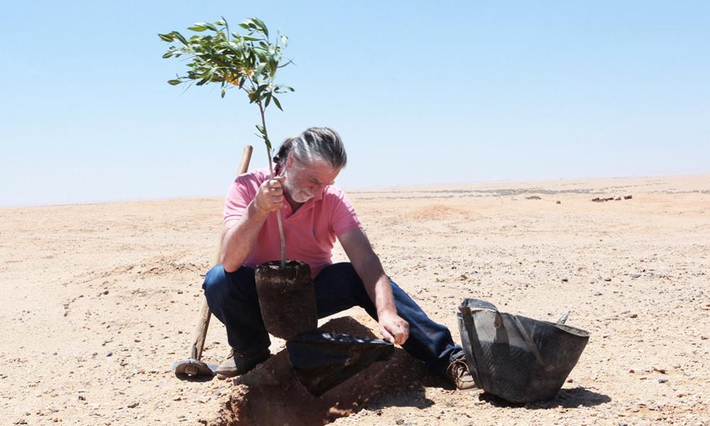 10 ans de réchauffement climatique en moins ? Facile : plantons des arbres