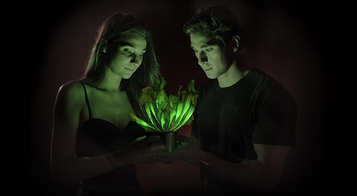 Notre prochaine lampe sera une plante