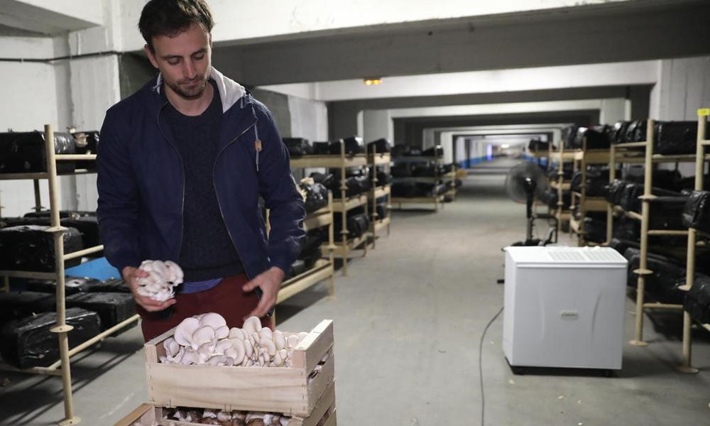 À Paris, cette startup a créé une ferme bio dans un parking souterrain
