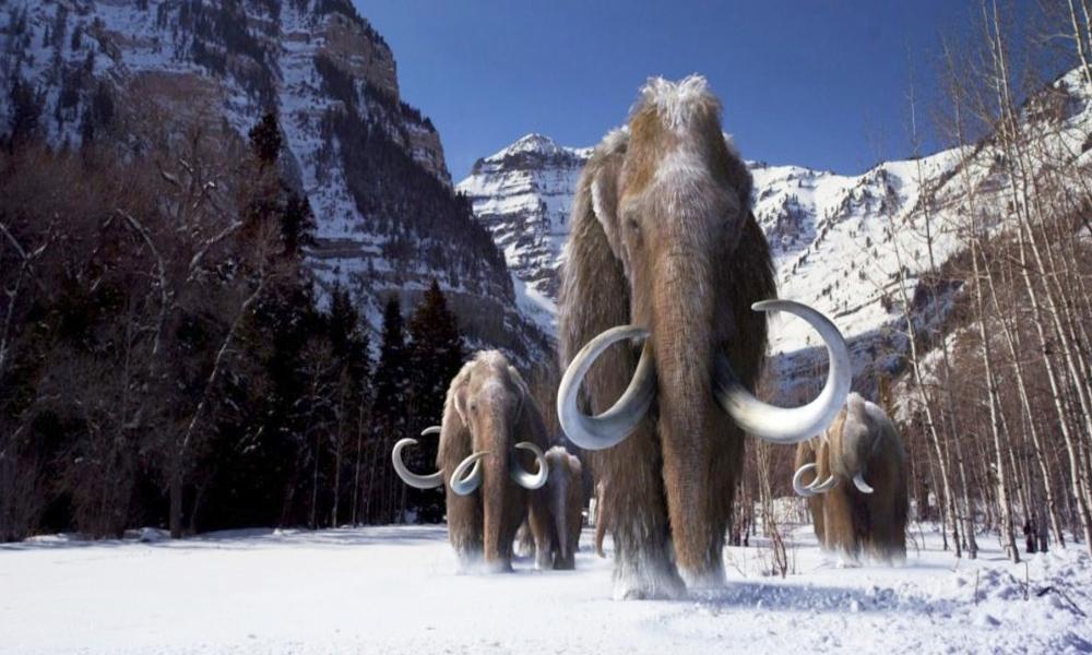 Le pari fou d'un parc russe ? Des mammouths pour lutter contre le réchauffement climatique