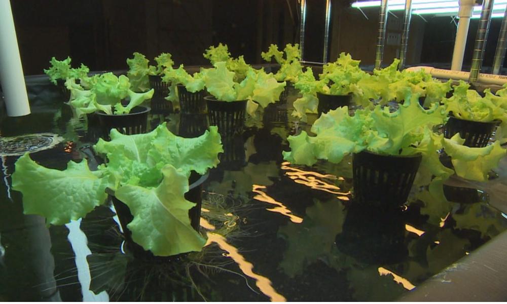 Cette startup utilise la chaleur des serveurs bitcoin pour faire pousser des aliments