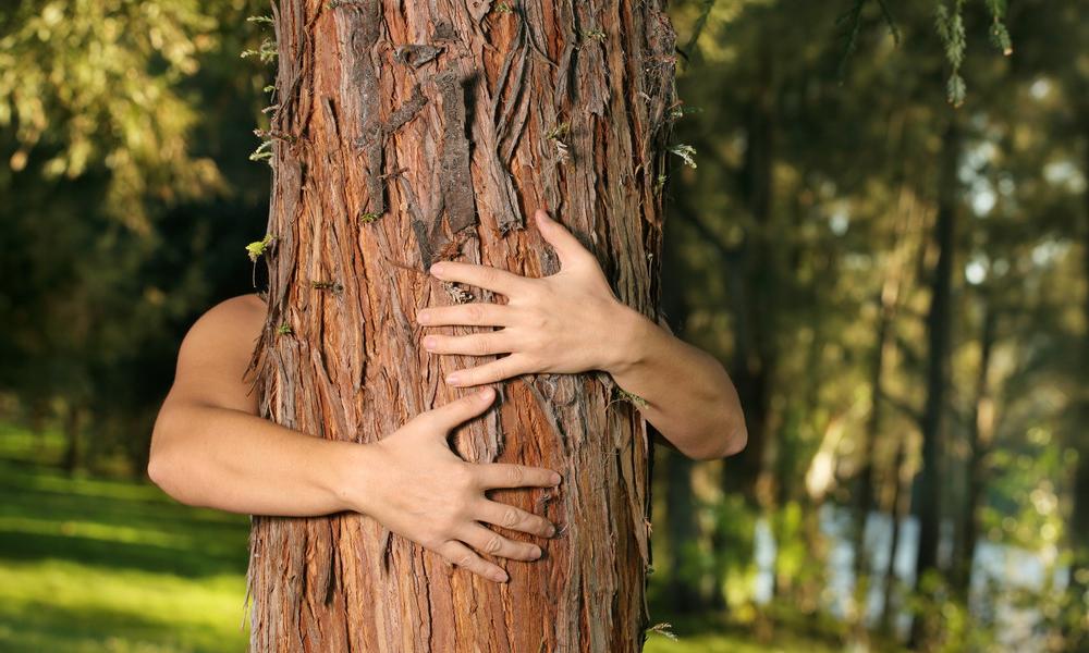 Pour sauver l'environnement, épousons des arbres