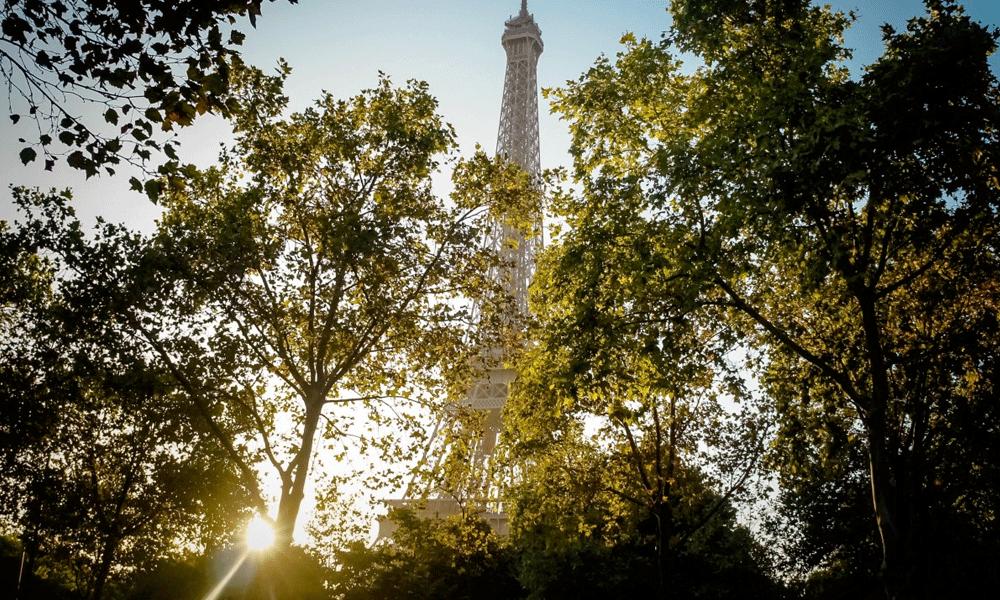 Une forêt d'un million d'arbres pour lutter contre la pollution parisienne