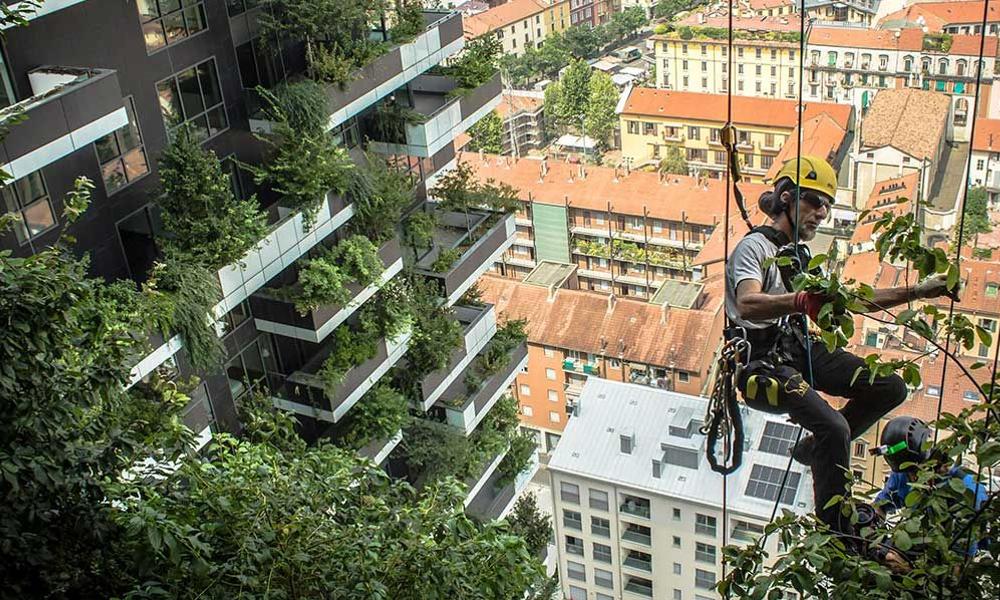 On pourra bientôt vivre en forêt en plein centre-ville