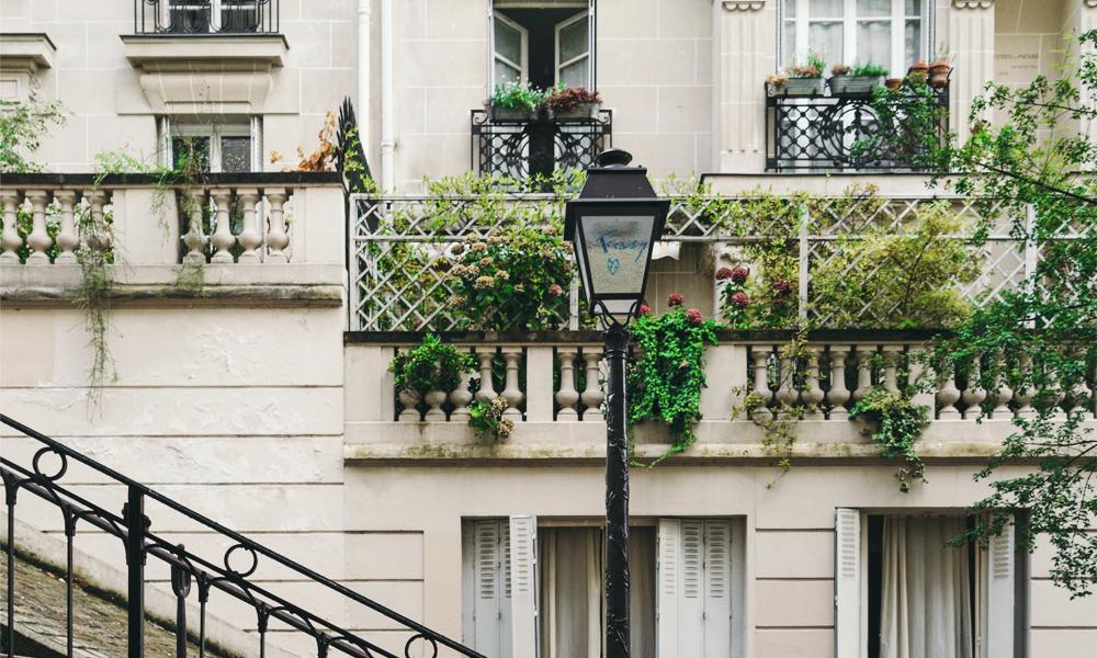 La mairie de Paris autorise la culture du houblon… sur ses murs