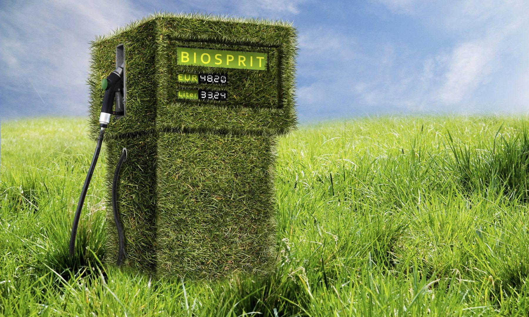 Un carburant à base d'algues c'est possible (et c'est pour bientôt)