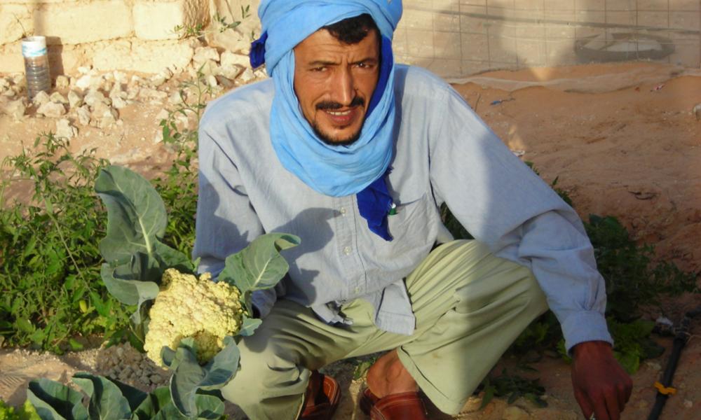 Contre la famine, il cultive le Sahara et ce n'est pas un mirage