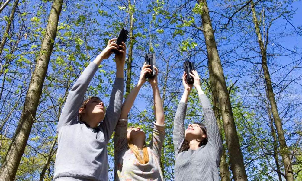 Près d'Albi, ils plantent 30 000 arbres et créent la première forêt préhistorique de France