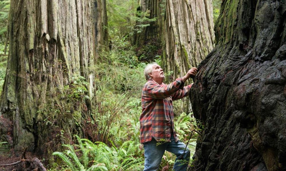 David Milarch cloner arbre