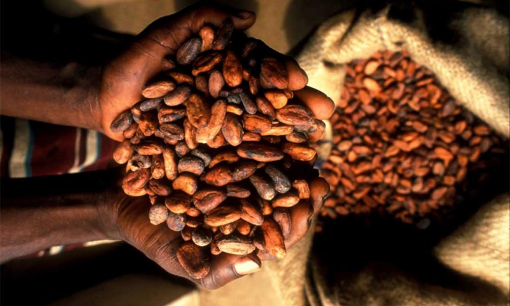 Des Ghanéens ont inventé un biocarburant à base de chocolat