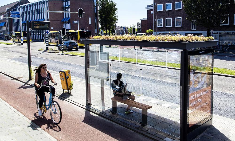 Aux Pays-Bas, des abribus en fleurs pour sauver les abeilles