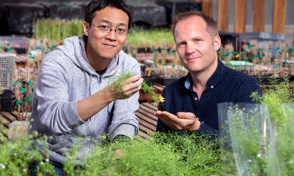 Ces chercheurs ont créé des super-plantes capables d'absorber 50% des émissions de CO2