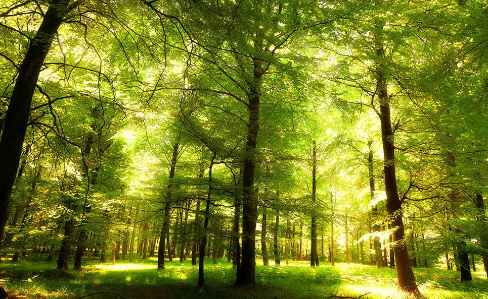 Le Danemark organise le premier «téléthon climatique» et plante 1 million d'arbres