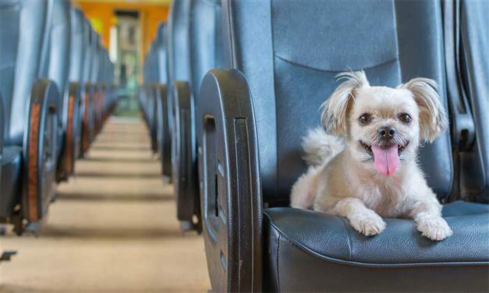 Quel moyen de transport adopter pour voyager avec son chien ?