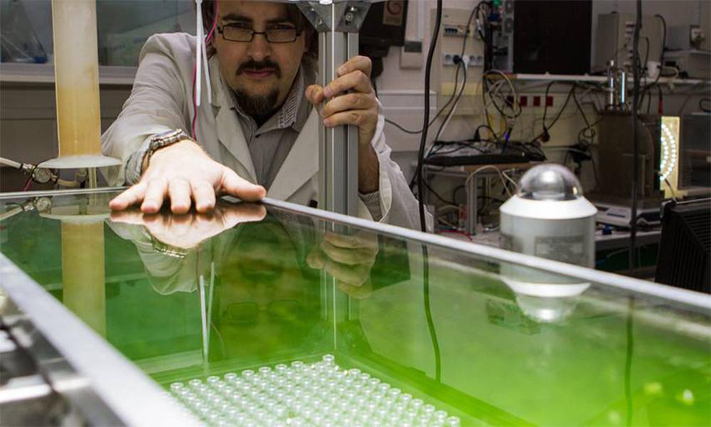 Adieu bitume, ces Français veulent construire des routes avec des algues