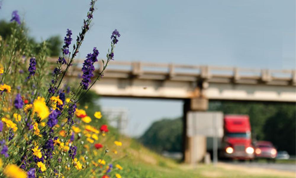Pour sauver les abeilles, l'Angleterre va arrêter de tondre les bords des routes