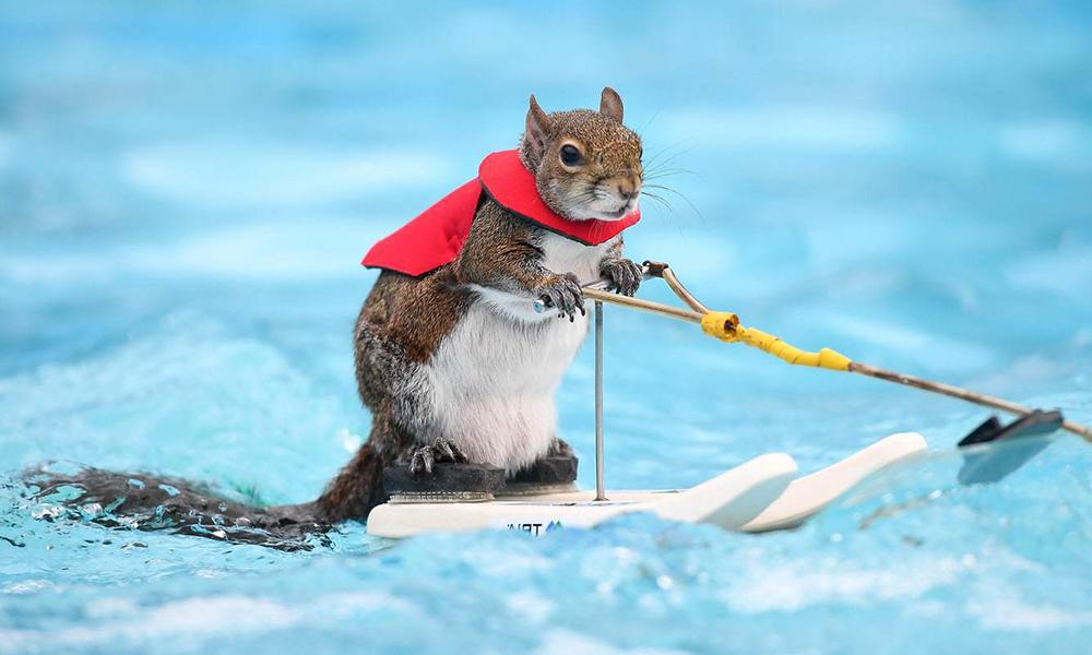Connaissez-vous Twiggy, l'écureuil trop stylé qui fait du ski nautique ?