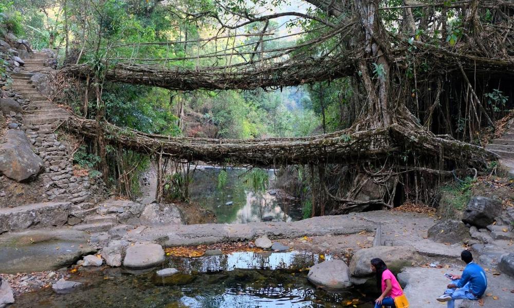 Adieu béton : en Inde, on construit des ponts végétaux