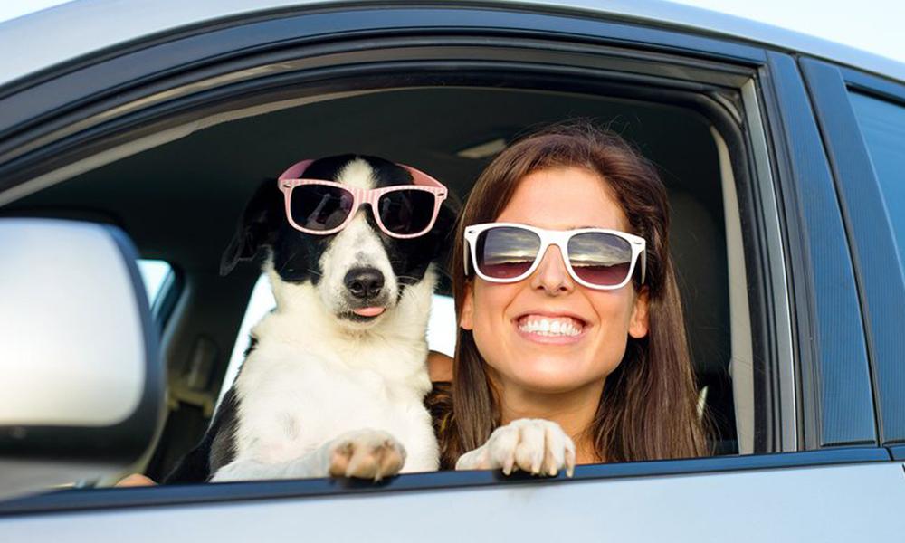 Conduire avec son chien à bord réduirait le stress de 50%