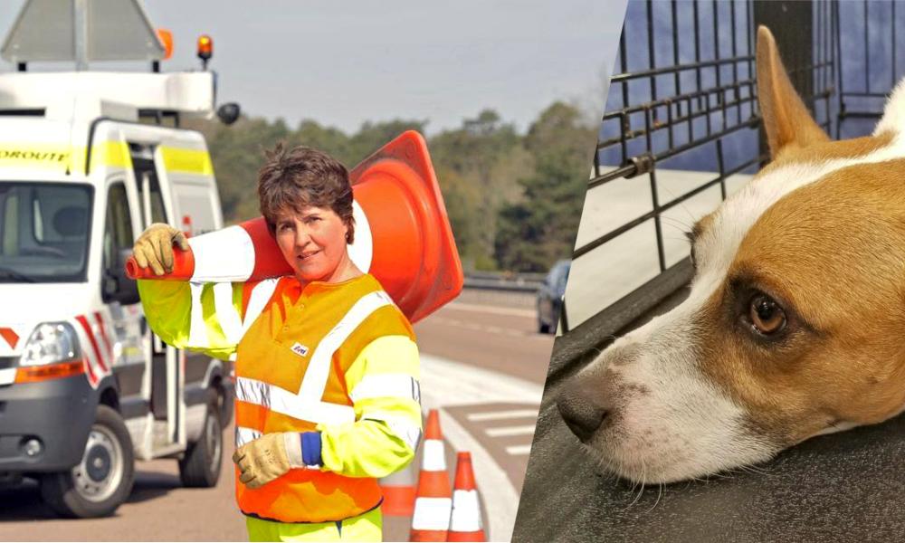 Comment sont sauvés les chiens abandonnés sur les autoroutes ?