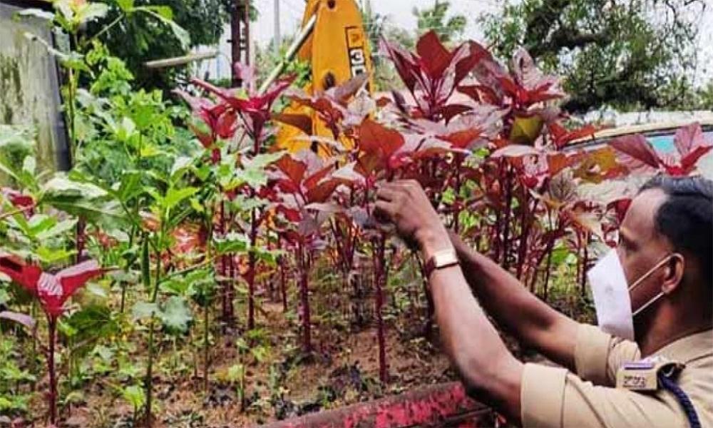 Ce policier indien utilise les véhicules saisis pour y faire pousser des légumes