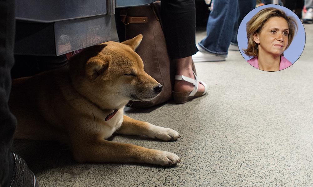 Grâce à Valérie Pécresse, le métro est désormais gratuit pour les chiens