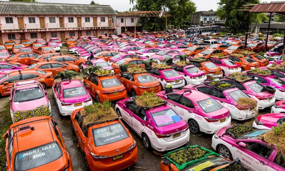 Immobilisés par la Covid-19, ces taxis sont recyclés en bassins pour grenouilles