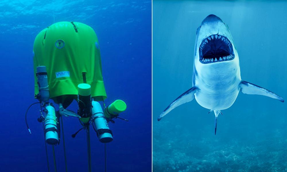 Cette tente sous-marine permet d'observer les requins, sans se faire bouffer